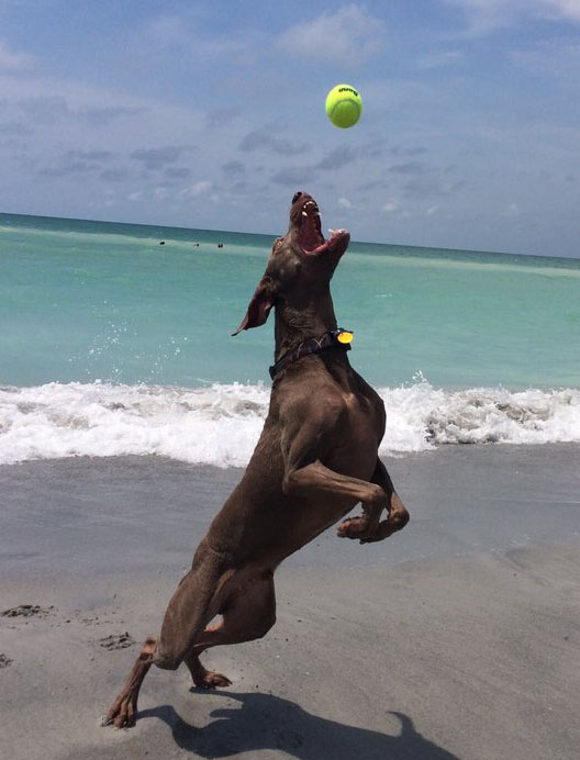 Venice dog park and beach addys villas hotel lodging vacation dog playing at brohard beach solutioingenieria Gallery